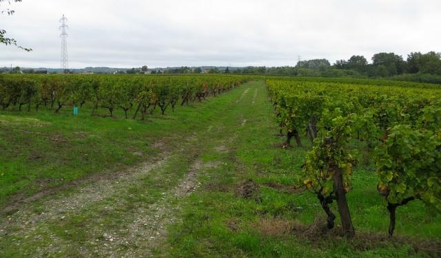 Chateaux La Croix Vineyards