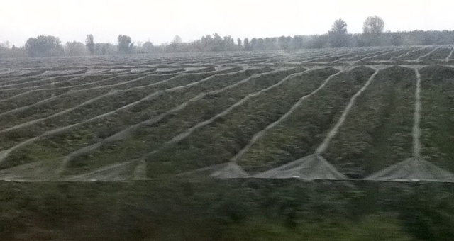Drenched Vineyards Bordeaux