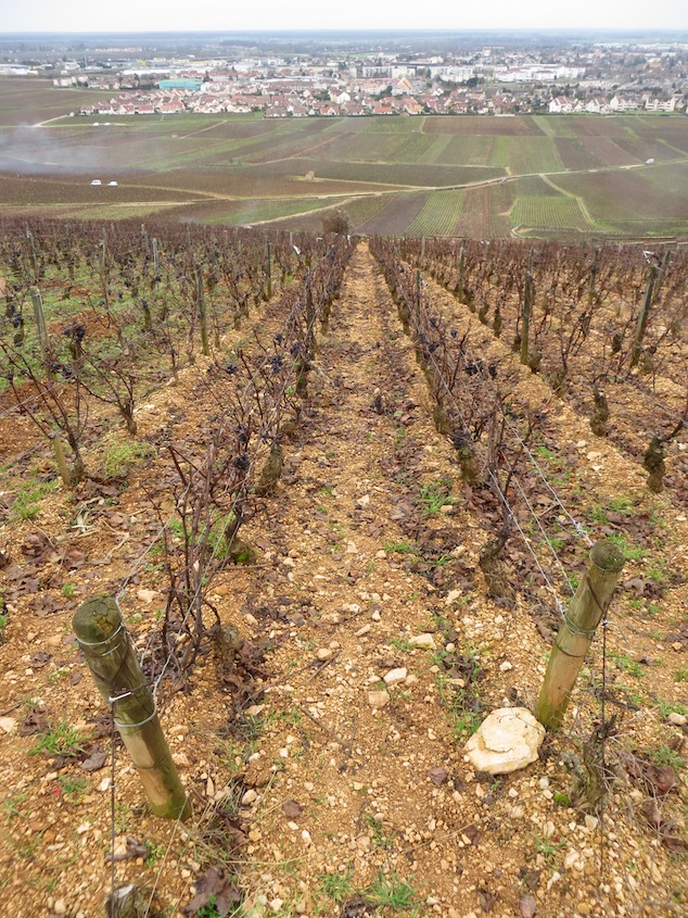 Vineyard Chalk Soil Beaune