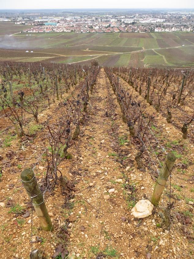 Vineyard Chalk Soil Beaune