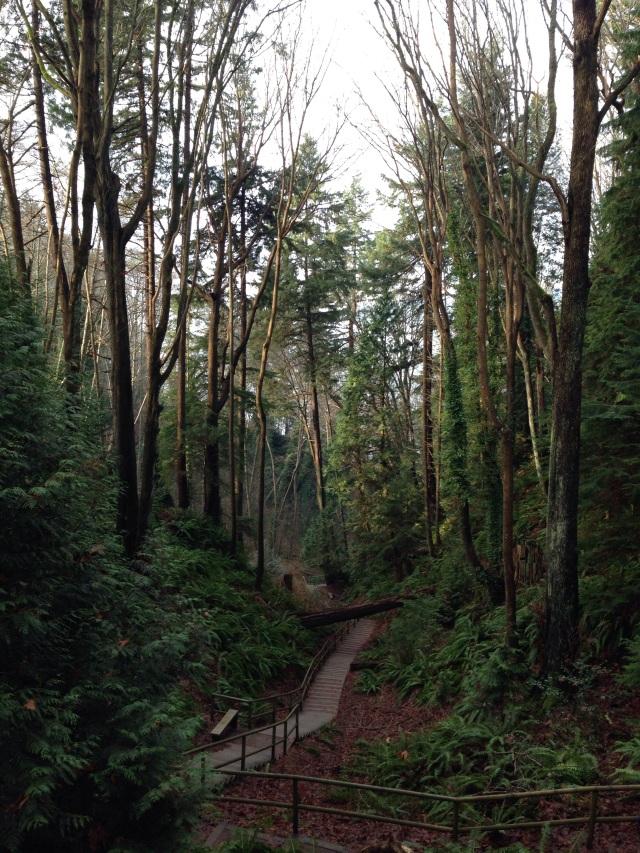 Vancouver ravine