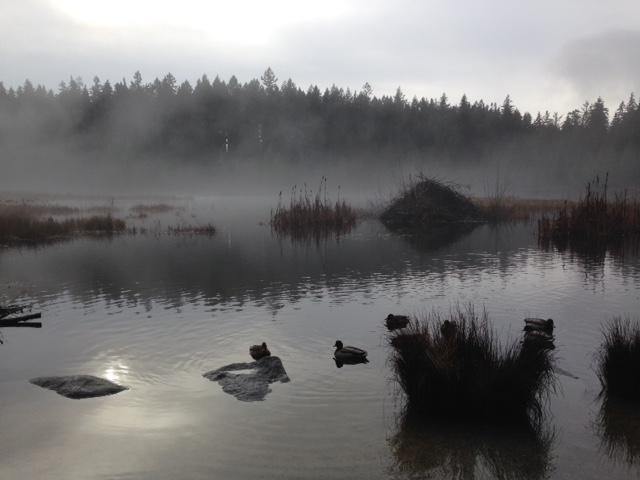 Stanley Park Beaver Pond