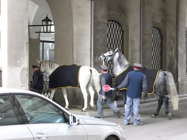 Spanish Riding School Horses Vienna