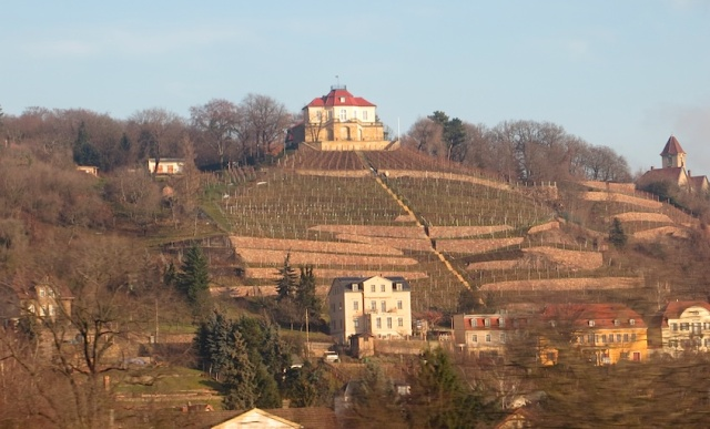 Meissen Vineyards