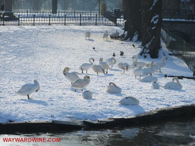 Bruges Belgium Geese