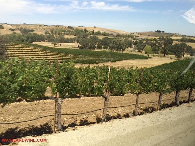 Fratelli Perata Winery Drive