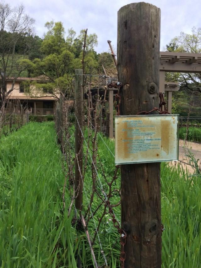 Pine Ridge Test Vineyard