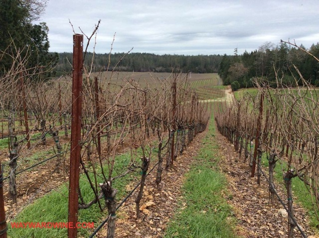 Howell Mountain Lokoya Vineyard