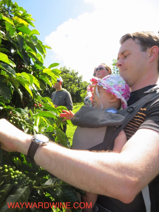 Dad Baby Coffee Farm