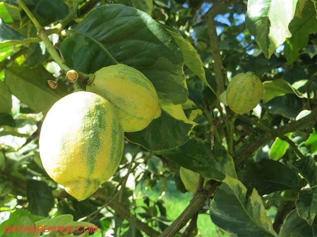 O O Lemons