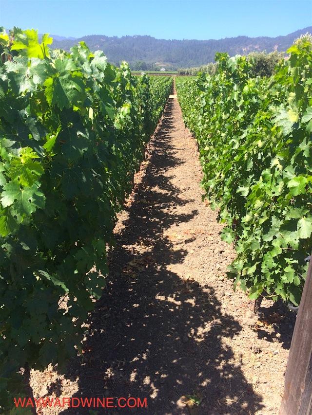Opus One Vineyard