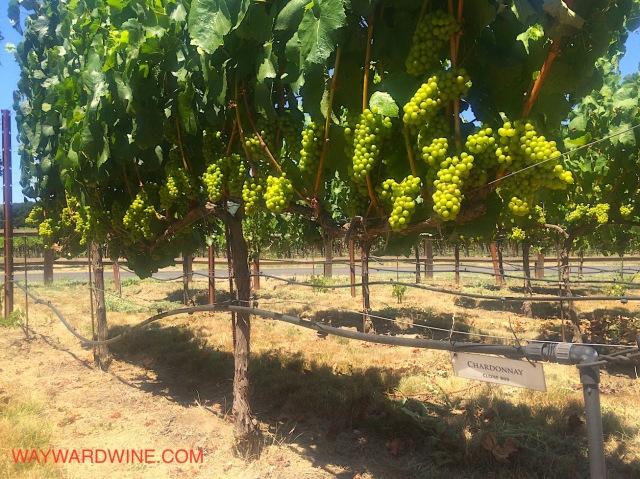 Trefethen Vines Chardonnay
