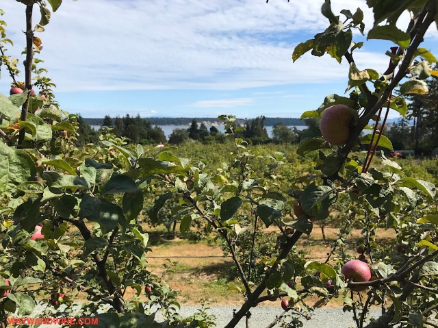Apples Sea Cider View